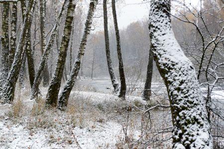 «Зимние узоры». Фотоцентр