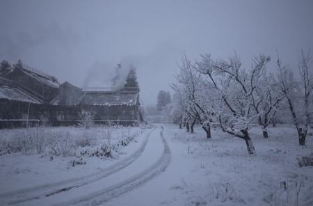 Фільм «Історія зимового саду». Фестиваль Docudays UA