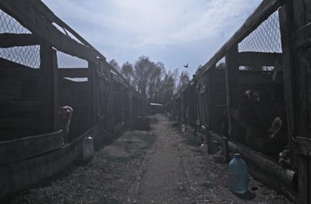 Фільм «Укриття». Фестиваль Docudays UA