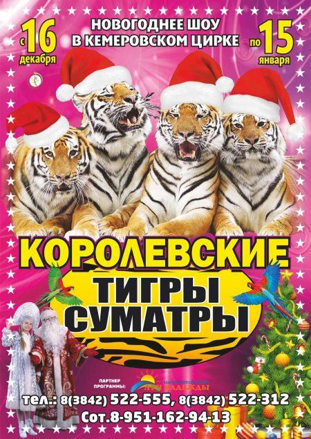Королевские тигры Суматры. Кемеровский цирк