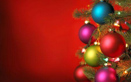 Елки 2019 в Житомире и новогоднее расписание