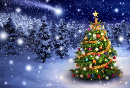 Елки 2020 в Южно-Сахалинске и новогодние праздники