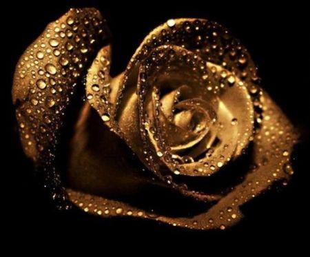 Фестиваль «Золота троянда» 2017