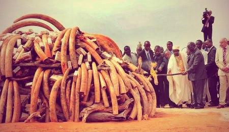 Всемирный фонд дикой природы,браконьеры