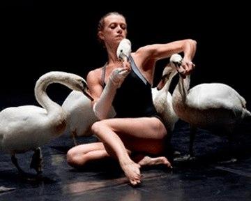 """балет """"Лебедь"""",Le Guetteur"""