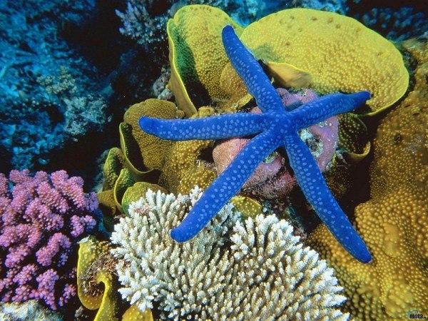 Власти объявили неприкосновенным участок океана