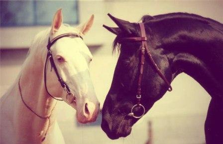 Лошади лечат от зависимости