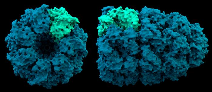 Что такое белки. Разбираемся вместе