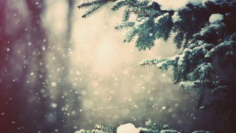 В лесу родилась ёлочка. Почему не стоит покупать елки.