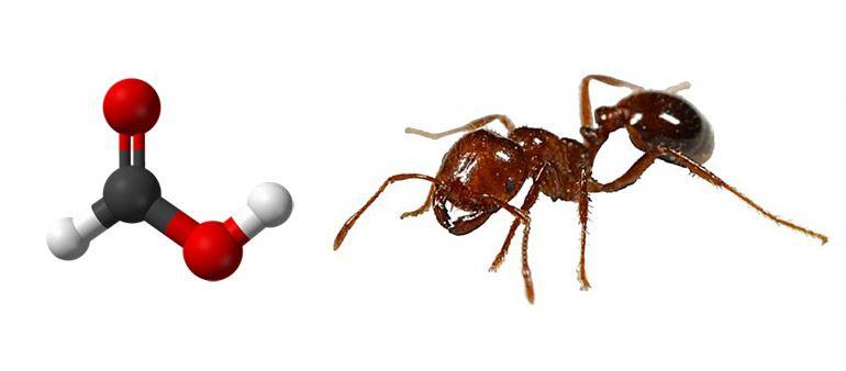 муравьиная кислота кислота