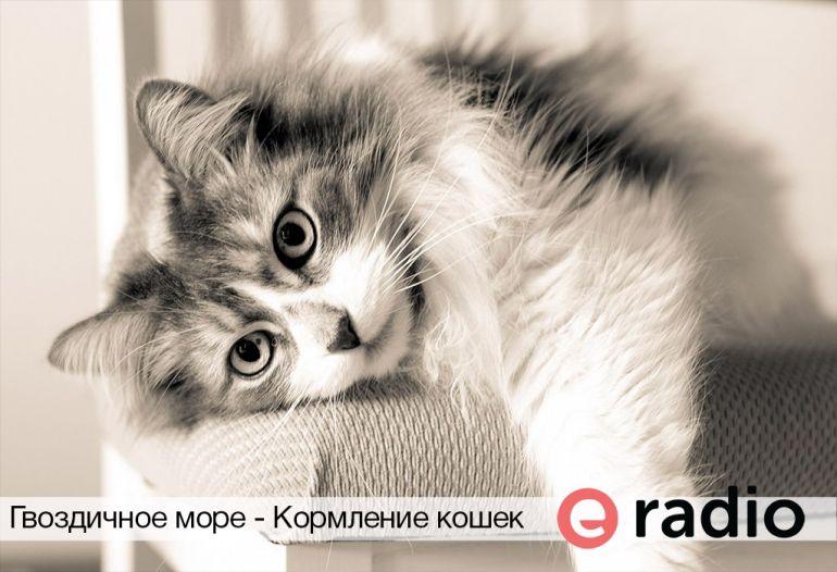 Гвоздичное море - Кормление кошек