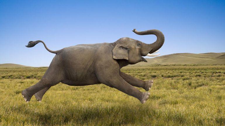 Авторский проект Ксении Самохиной. Как общаются слоны?