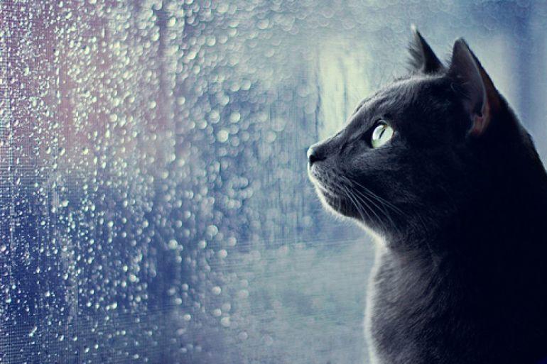 Что делать во время дождя