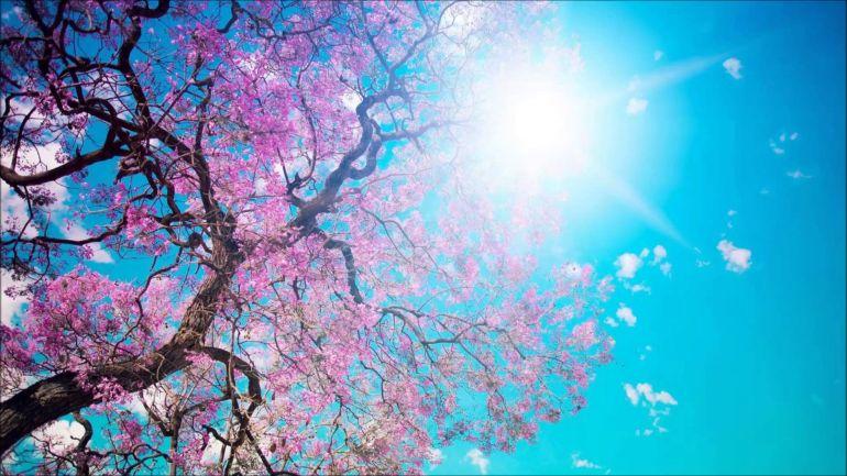 Любовь, просветление, природа