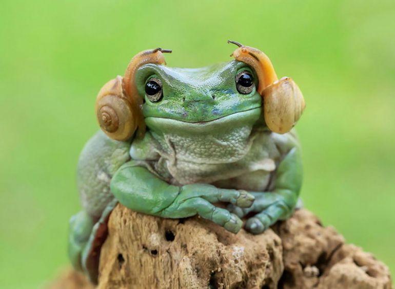 Удивительные фотографии лягушек от Танто Йенсена