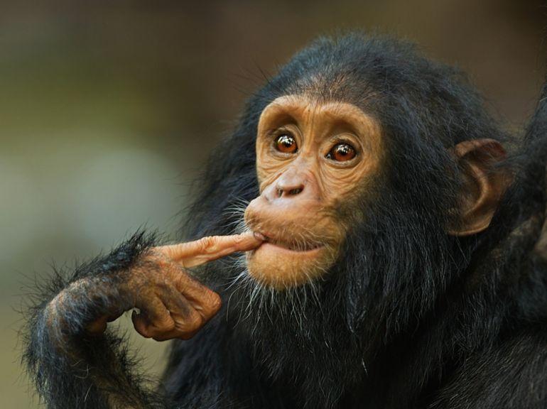 Сознание у животных - Зорина Зоя