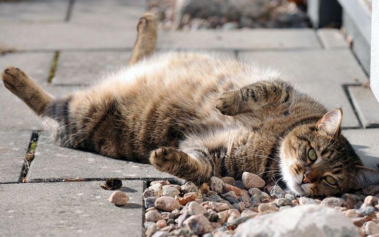 Кошечка. Толстый кот. Киска