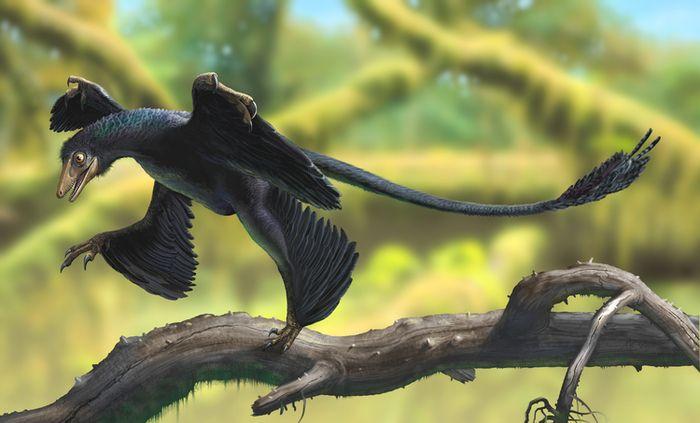 Откуда мы знаем, какого цвета были динозавры?