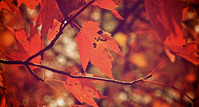 10 фильмов, которые хочется смотреть каждую осень